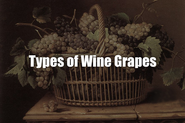 types-of-wine-grapes